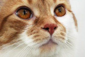 насморк у кошки