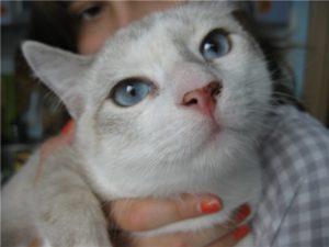 у кошки черный нос