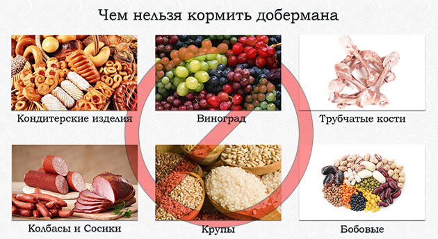 Существует ряд продуктов, которые строго на строго запрещены доберманов