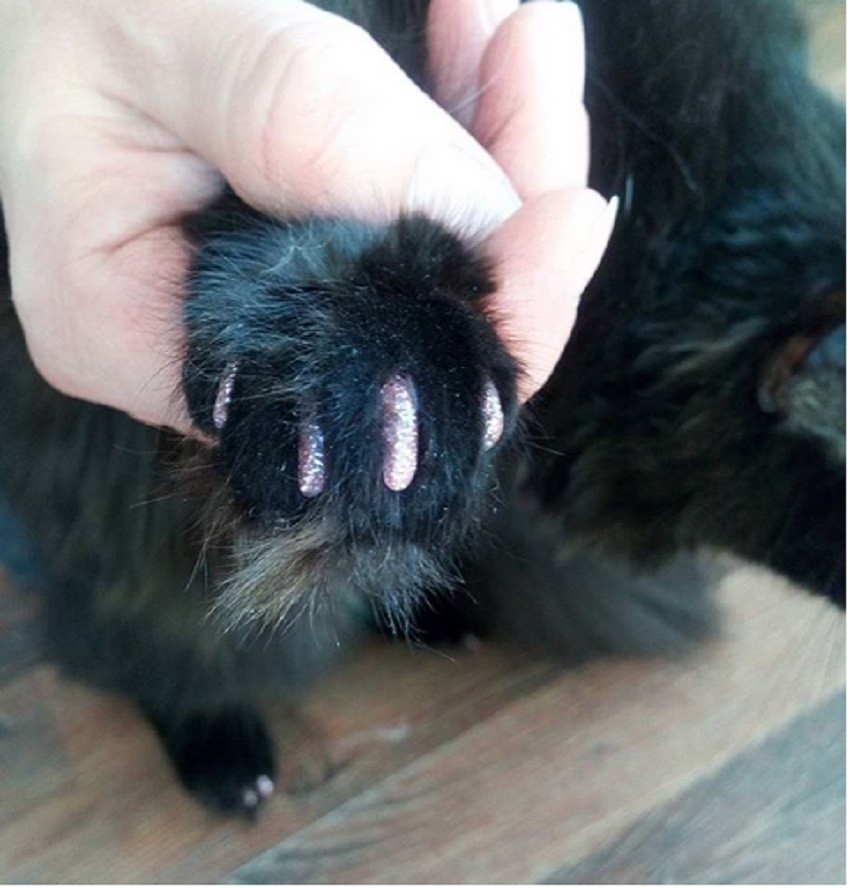 подстригаем когти коту