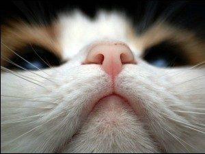 у кота сухой нос