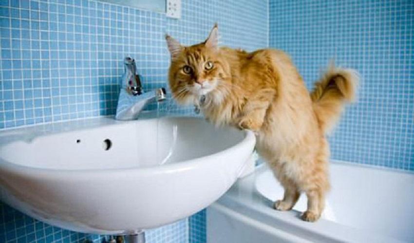 как заботиться за полостью рта котика