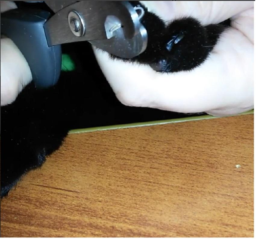 Обрезание когтей коту
