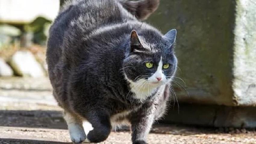 Питание стерилизованной кошки