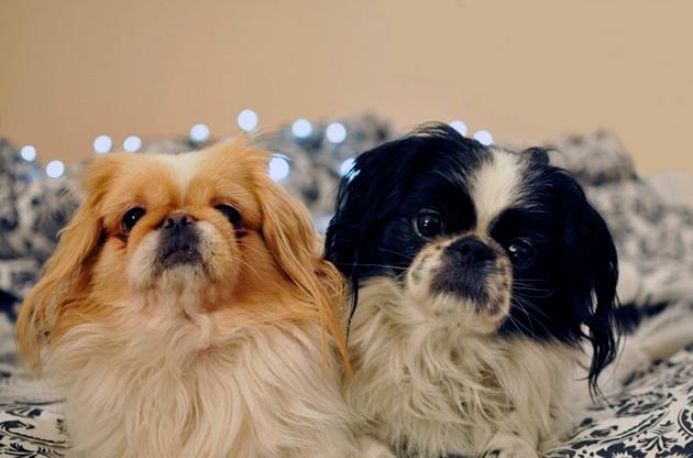 При выборе собаке первое на что стоит полагать на визуальный контакт с будущим питомцем