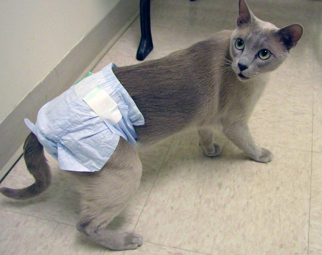У кота энурез