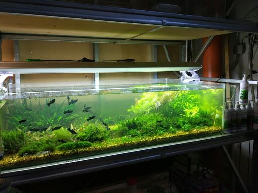 Как правильно выбрать аквариум и стеллаж для содержания цихлид