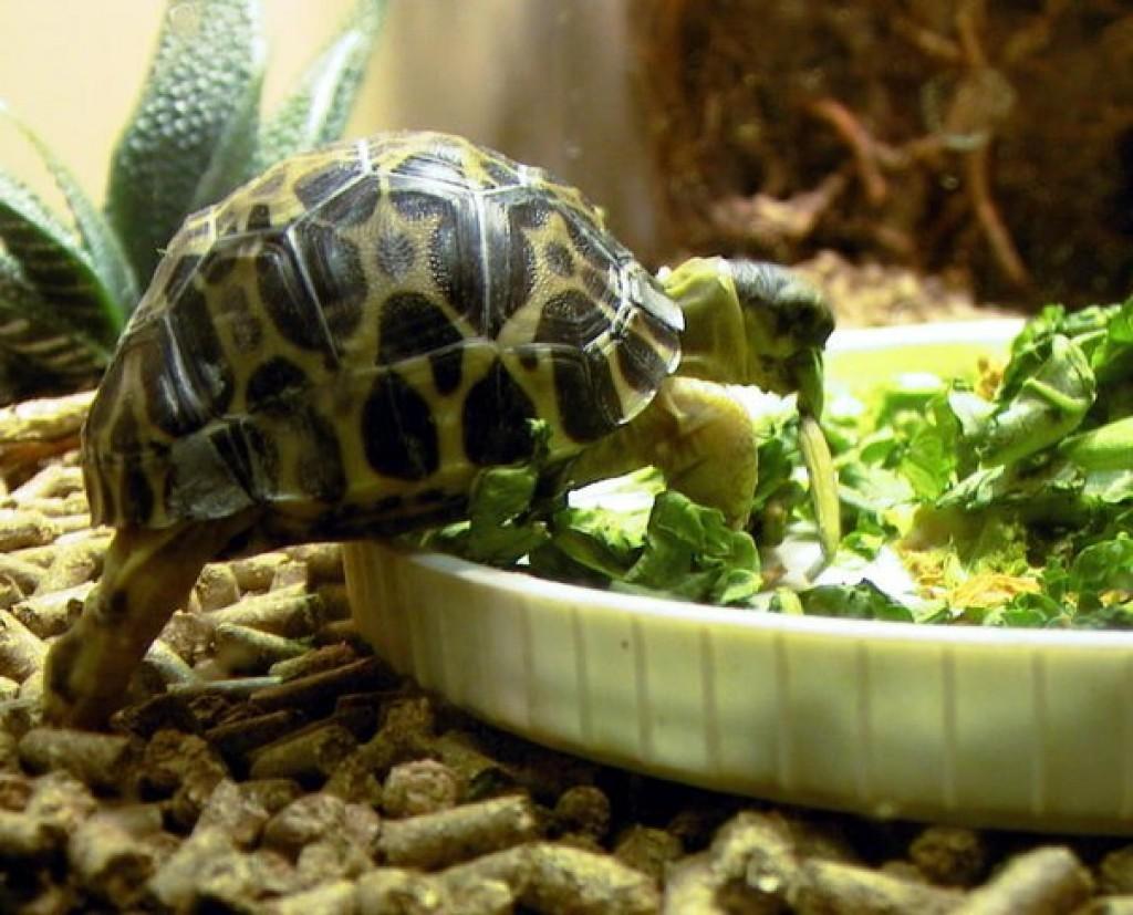Чем кормить черепах в домашних условиях