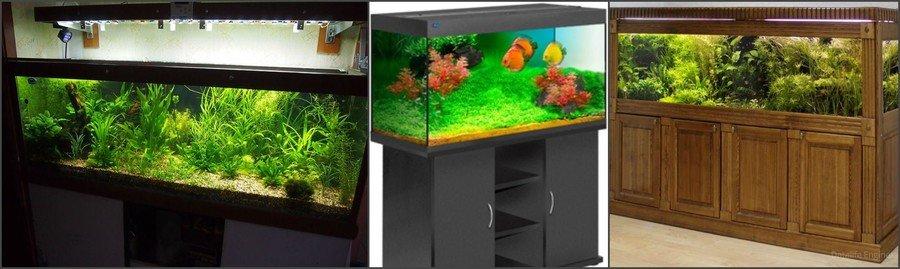 Как правильно выбрать аквариум для дома