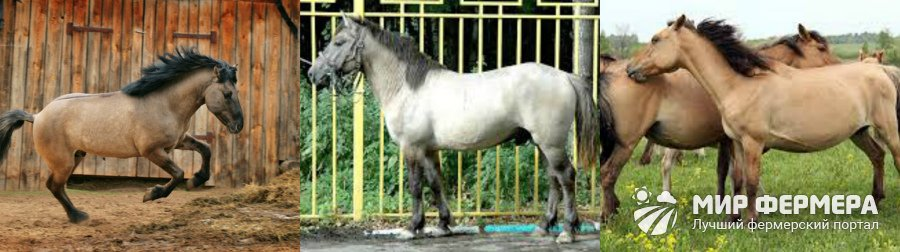 Породы лошадей с фото и описаниями