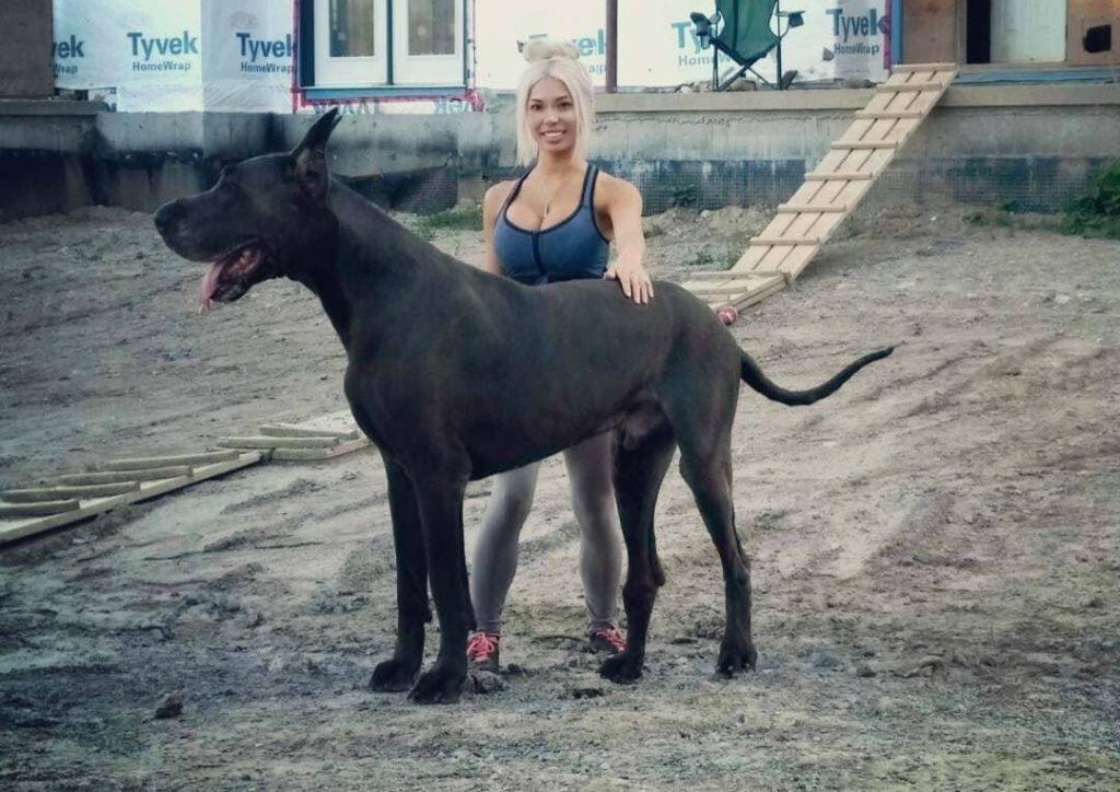 Немецкий дог гром: фото, размер, порода собаки, особенности