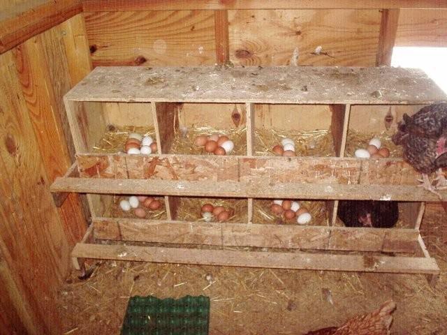 Обустройство гнезд для курятника