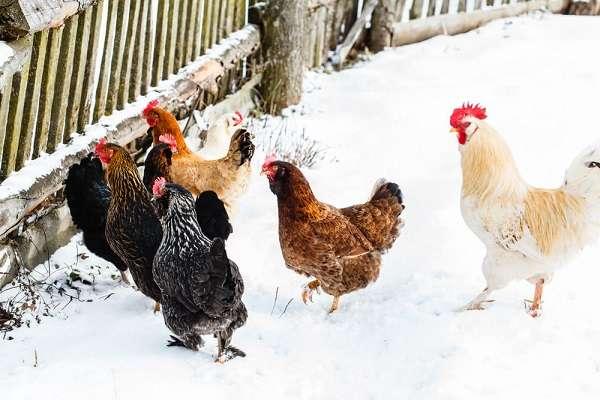 Устранив полностью или частично эти естественные для зимы условия окружающей среды