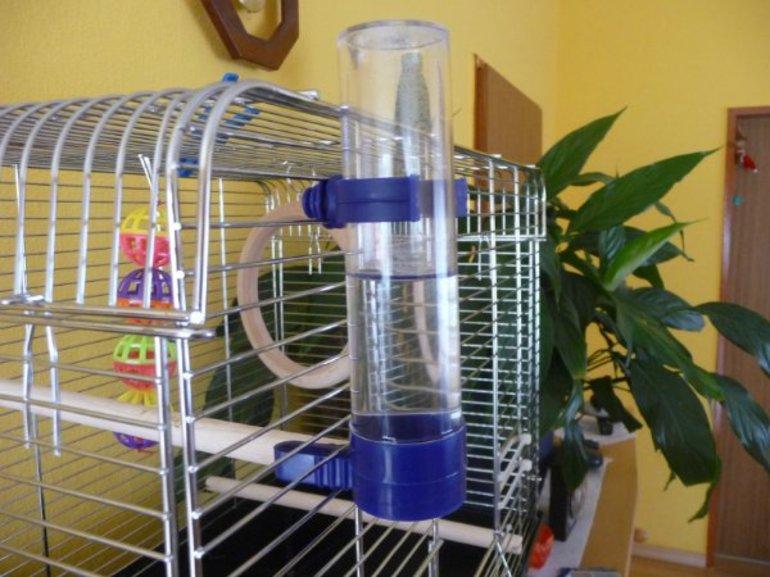 Атрибуты для попугаев